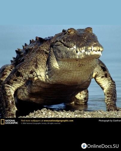 Кадры из фильма фильмы документальные про крокодилов смотреть онлайн